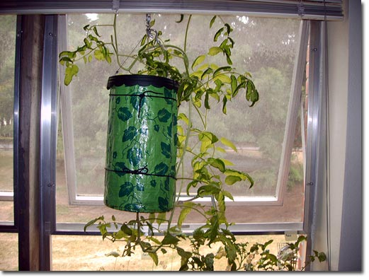 Indoor Vegetable Garden With Topsy Turvy Planters And