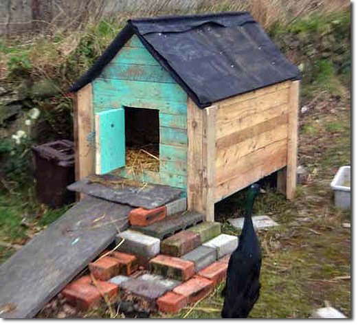 A complete guide to using slugs as a resource with indian for How to build a duck shelter